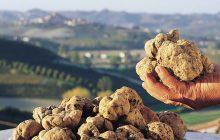 Il tartufo: Vanto della tradizione culinaria italiana